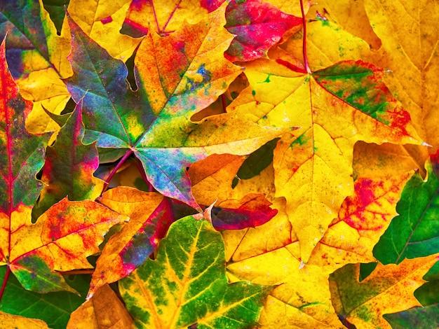 Feuilles d'automne coloré fond nature