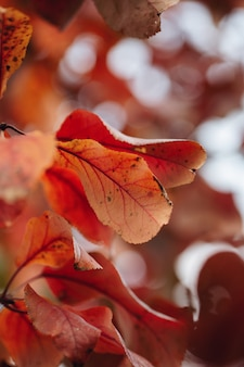 Feuilles d'automne coloré sur la nature floue