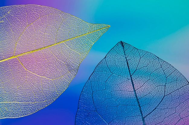 Feuilles d'automne colorées abstraites