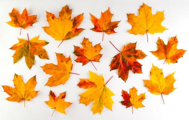 Feuilles d'automne colorées sur fond blanc
