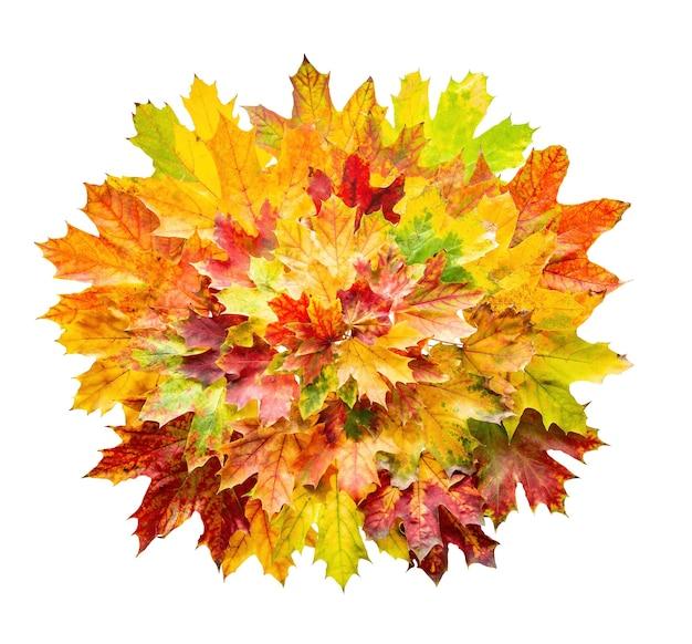 Feuilles d'automne colorées isolées sur fond blanc