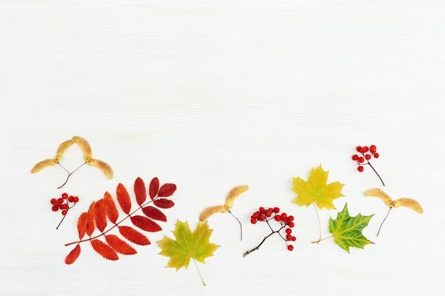 Feuilles d'automne colorées à plat sur un fond en bois blanc avec espace de copie. cadre de différentes feuilles d'érables et de sorbiers, couleurs d'automne. vue de dessus.