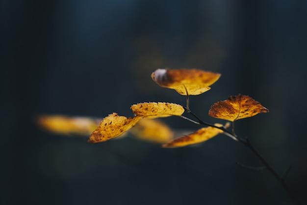 Feuilles d'automne colorées s'étendant contre une ombre sombre dans les bois
