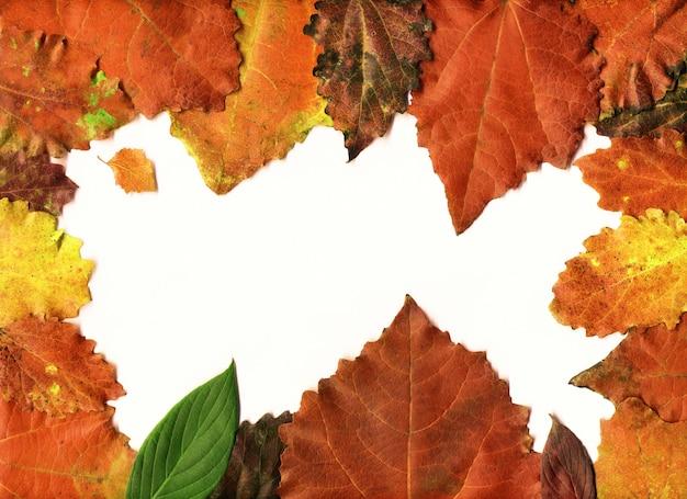 Feuilles d'automne composition