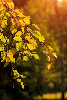 Les feuilles d'automne de couleur jaune ornent le beau bokeh de la nature