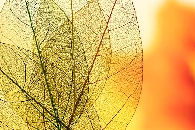 Feuilles d'automne de couleur jaune vibrante