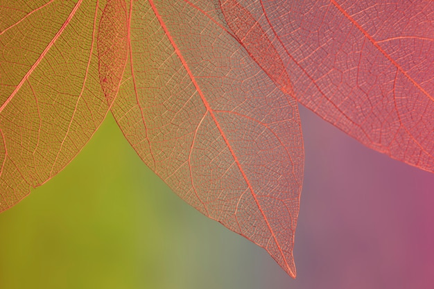 Feuilles d'automne de couleur rouge abstraite