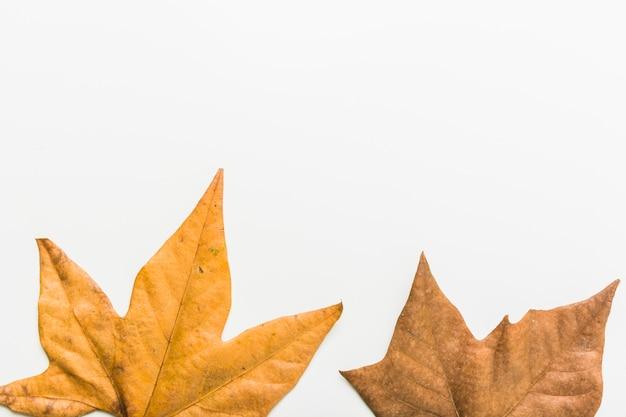 Feuilles d'automne dans le cadre latéral