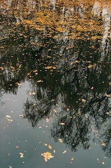 Feuilles d'automne dans l'eau lac d'automne dans le parc automne