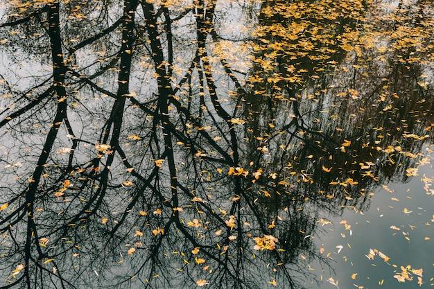 Feuilles d'automne dans le lac d'automne de l'eau dans le parc