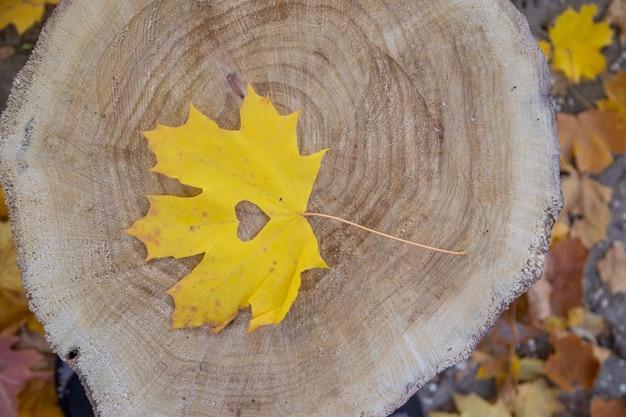 Feuilles d'automne dans le parc. mise au point sélective.