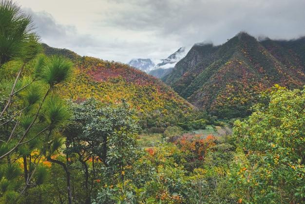Feuilles d'automne dans le paysage vue sur la montagne