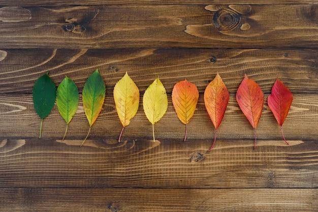 Feuilles d'automne disposées dans une bande passe du vert au rouge sur un fond en bois