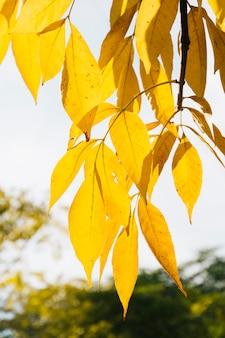 Feuilles d'automne dorées avec un arrière-plan flou