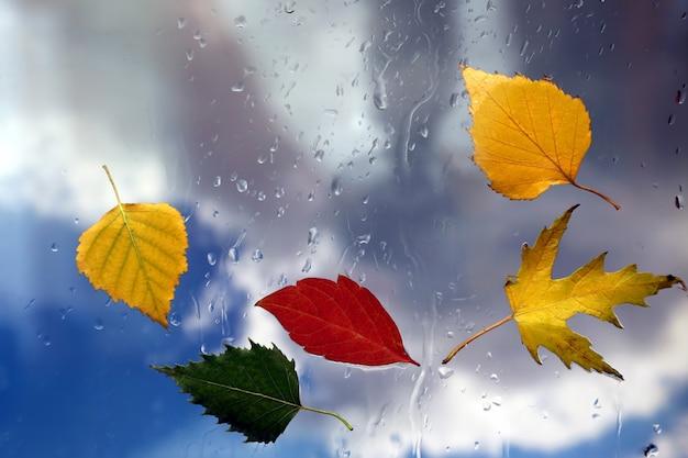 Les feuilles d'automne sur une fenêtre humide sur fond de temps pluvieux