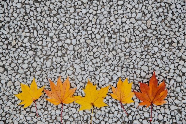 Feuilles d'automne avec un feuillage de cinq feuilles d'érable disposées dans un thème saisonnier multicolore