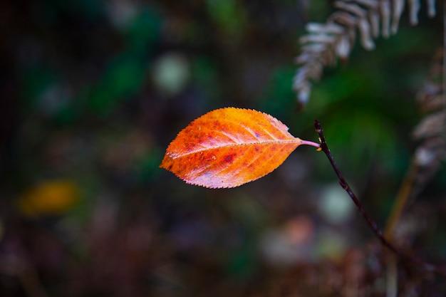Feuilles d'automne, feuilles, feuilles de couleur, automne, feuilles dans l'herbe, feuilles d'automne dans l'herbe, feuilles d'automne tombant, gouttes de rosée, gouttes de rosée sur les feuilles d'automne,