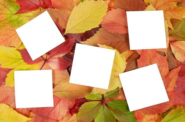 Feuilles d'automne et feuilles de papier