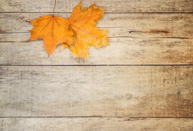 Feuilles d'automne sur fond en bois. mise au point sélective