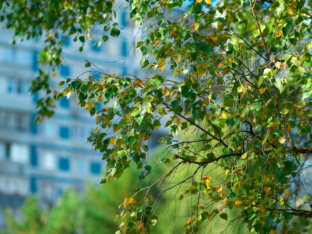 Feuilles d'automne sur le fond de nature de branche d'arbre