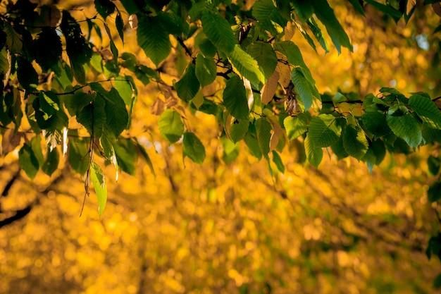 Feuilles d'automne et fond de nature floue
