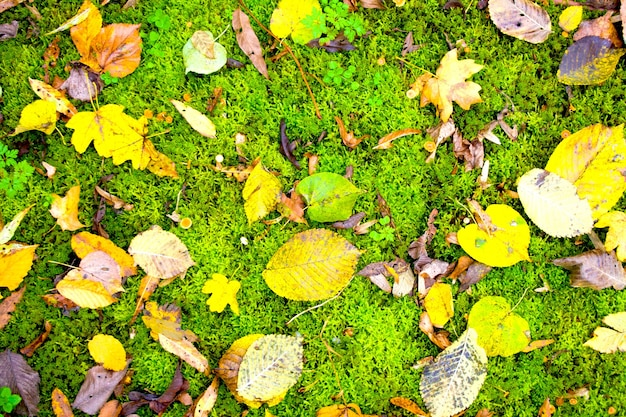 Feuilles d'automne fond naturel. beau jaune vif orange vert rouge brun automne nature fond horizontal. feuillage coloré sur mousse verte.