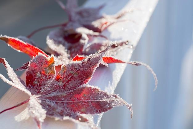 Feuilles d'automne givrées tombées matin ensoleillé