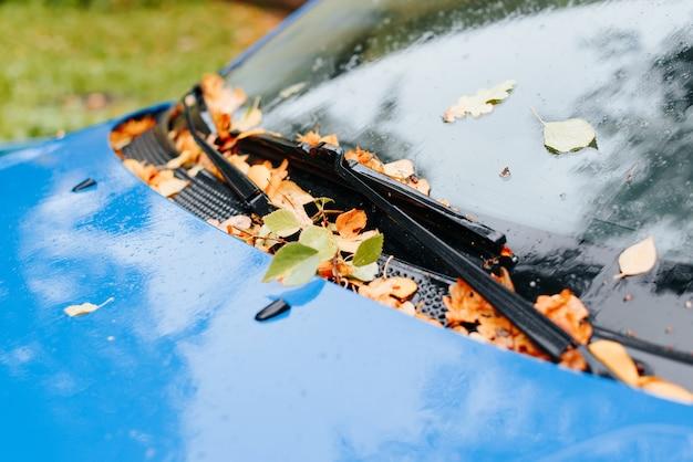 Feuilles d'automne humides tombées allongées sur le pare-brise et les essuie-glaces de la voiture à l'extérieur, gros plan. mise au point sélective