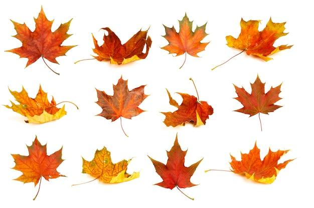 Les feuilles d'automne isolent les feuilles d'érable rouges et jaunes de fond en automne sur un fond blanc vierge