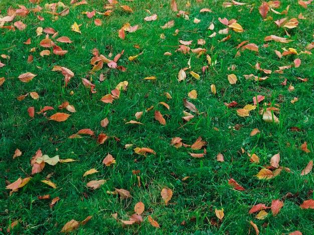 Feuilles d'automne jaune sur l'herbe verte. fond de la nature.