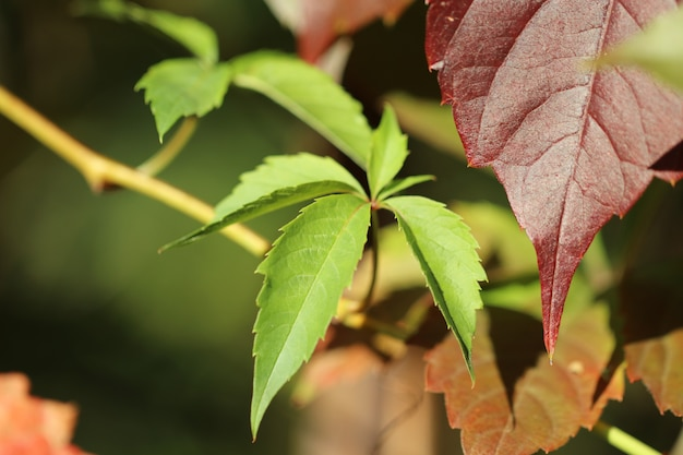 Feuilles d'automne jaune rouge bouchent