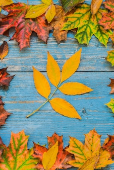 Feuilles d'automne jaune sur vieux bois bleu.