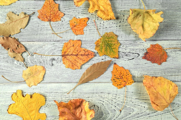 Feuilles d'automne jaune sur un vieux fond en bois clair