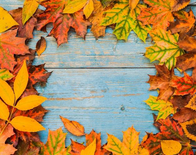 Feuilles d'automne jaune