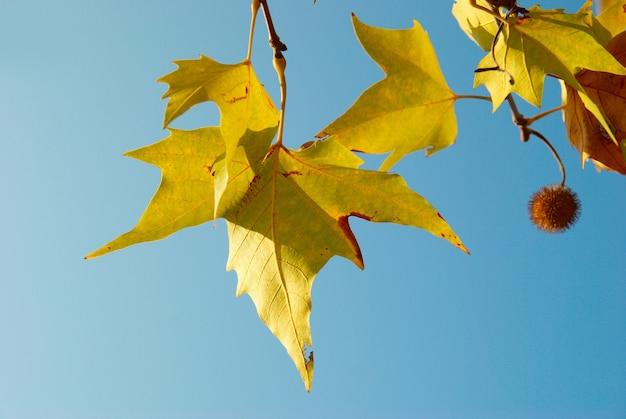 Feuilles d'automne jaunes.
