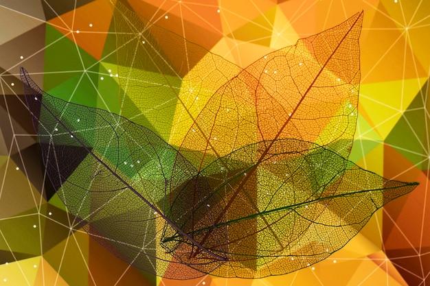 Feuilles d'automne joliment colorées