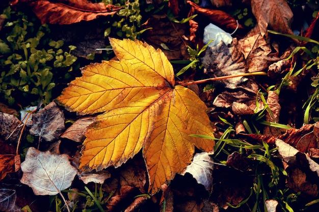 Feuilles d'automne et un livre. mise au point sélective.