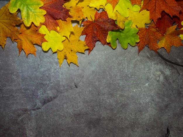 Feuilles d'automne lumineuses sur fond gris béton avec place pour le texte