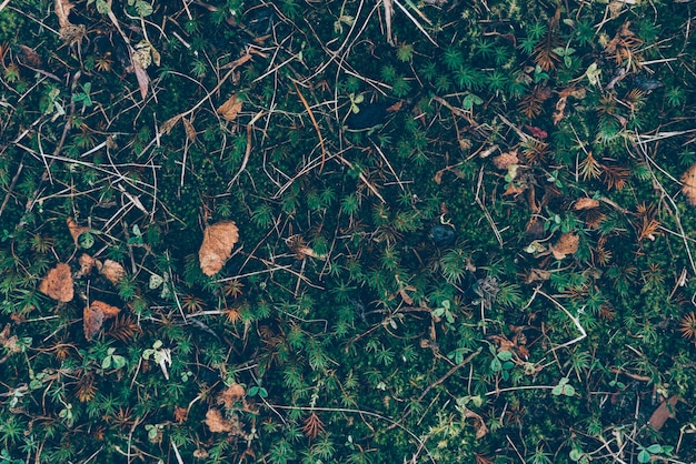 Feuilles d'automne et motif d'herbe, monochrome classique sombre art sombre de mauvaise humeur floral