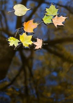 Feuilles d'automne multicolores dans l'eau avec le reflet d'un arbre