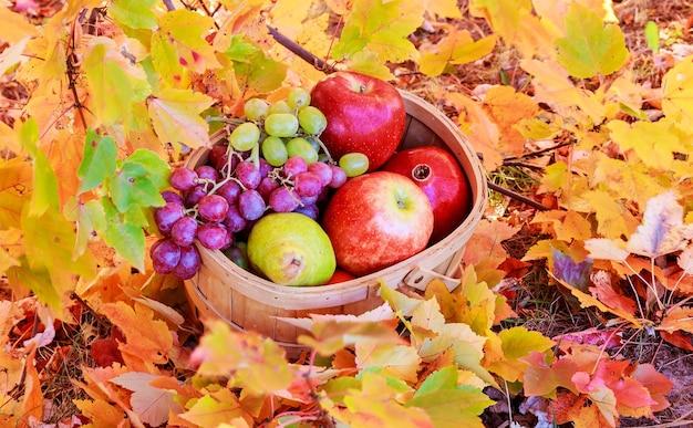 Feuilles d'automne pommes jaunes raisins grenades panier de pommes et raisins sur l'herbe verte