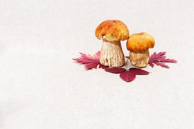 Feuilles d'automne rouge et cèpes de champignons forestiers avec espace copie sur fond clair.