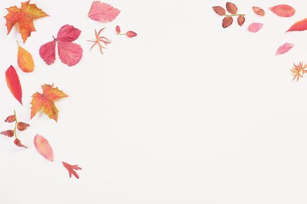Feuilles d'automne rouges sur fond blanc