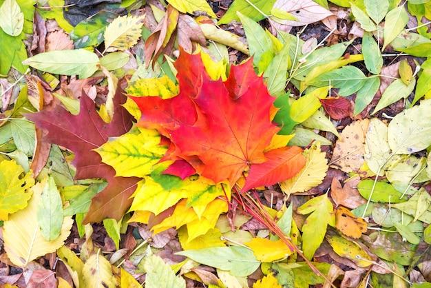 Feuilles d'automne rouges, oranges et vertes colorées sur le sol. fond d'automne