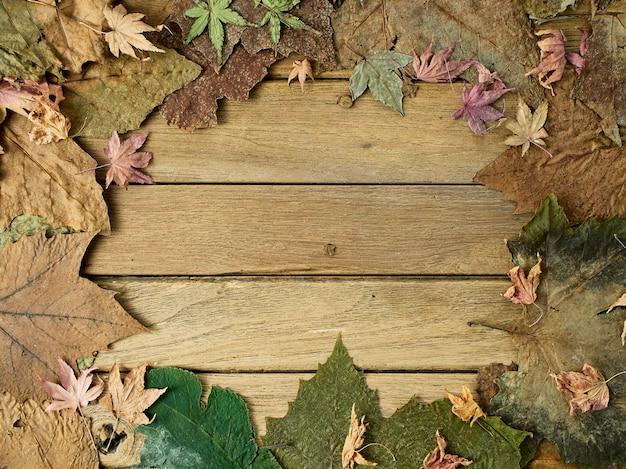 Feuilles d'automne saisonniers de coloré