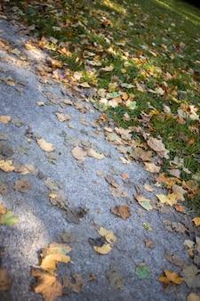 Les feuilles d'automne se trouvent sur la pelouse et le chemin dans le parc en gros plan beau concept d'automne