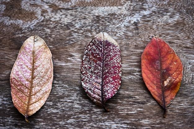 Feuilles d'automne séchées sur une table en bois