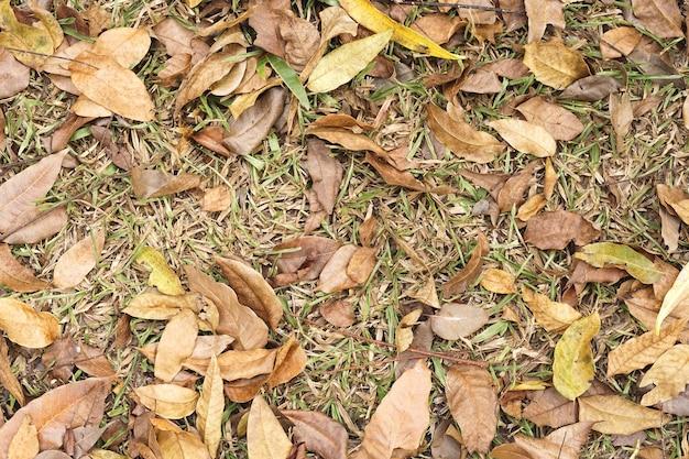 Feuilles d'automne sèches sur fond de sol
