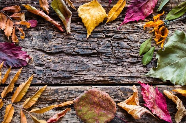 De feuilles d'automne sèches