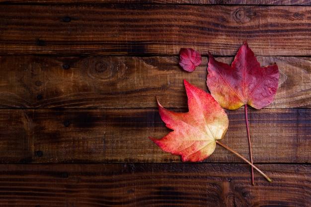 Feuilles d'automne sèches
